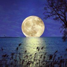 A Hold születésnapja